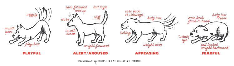 Dog Ear Positions Chart