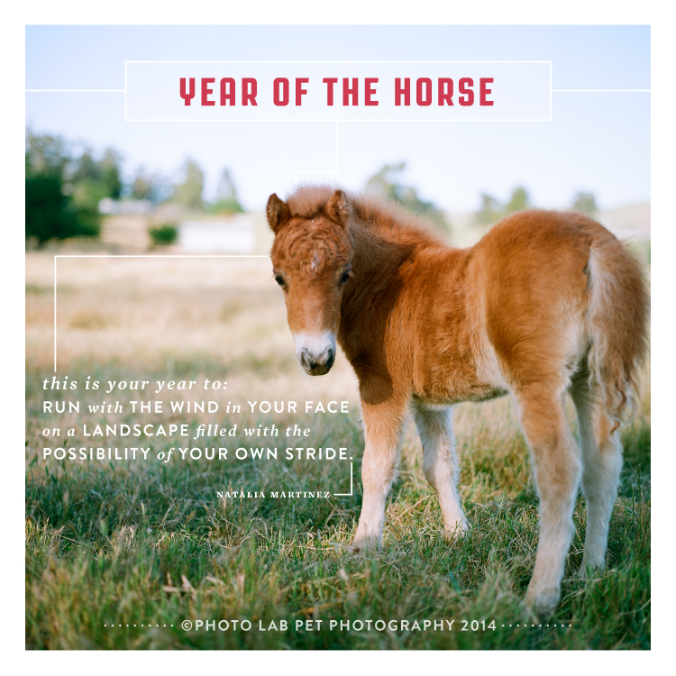 PL_Year_of_the_Horse