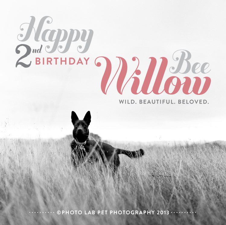 happy_bday_willow